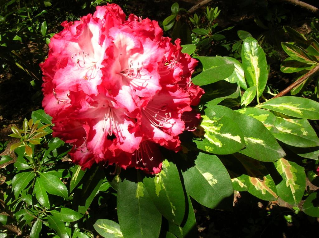 roosevelt_bloom_042513