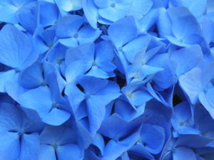 buchert-explosion-of-blue